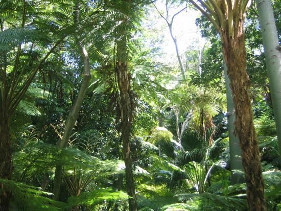Name: Dschungel.jpg Größe: 1024x768 Dateigröße: 610864 Bytes