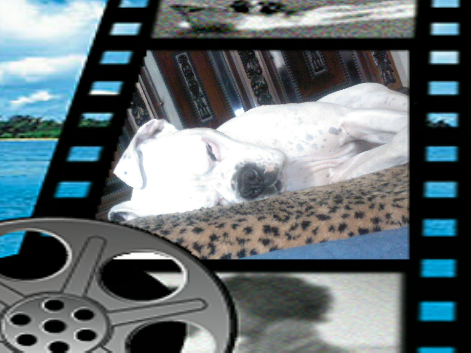 Name: Filou_Hollywood.jpg Größe: 1600x1200 Dateigröße: 263900 Bytes