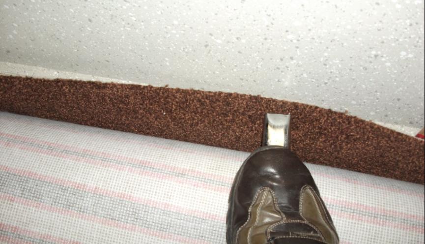 Immer schön auf dem Teppich bleiben  pagenstecherde