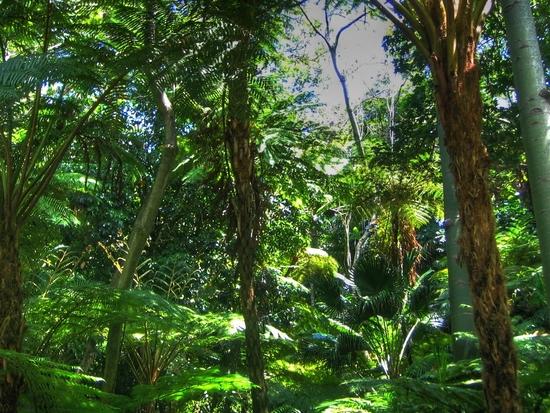 Name: Dschungel_HDR.jpg Größe: 1024x768 Dateigröße: 1003557 Bytes