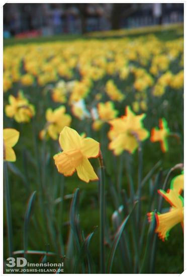 Name: Blume-stereo-rahmen-small.jpg Größe: 676x1000 Dateigröße: 424468 Bytes