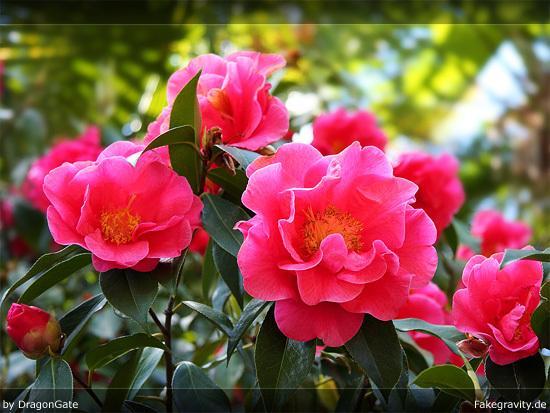 Name: wallpaper_dragongate_rhododendron_01_550x413.jpg Größe: 550x413 Dateigröße: 146744 Bytes