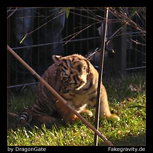 Name: picture_dragongate_tiger_01.jpg Größe: 300x300 Dateigröße: 125740 Bytes
