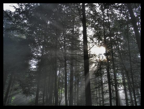 Name: Fssen-Wald1.jpg Größe: 800x609 Dateigröße: 486079 Bytes