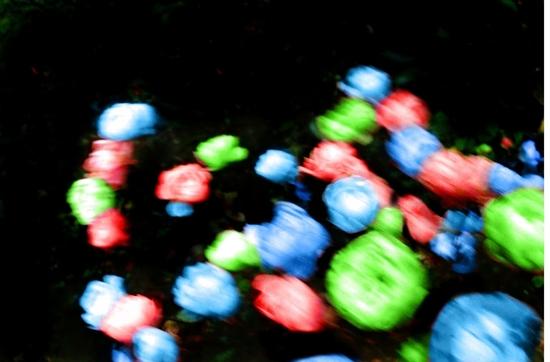 Name: kroon_arne_leuchtblumen.JPG Größe: 1270x837 Dateigröße: 436800 Bytes
