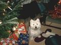 Name: Weihnachten_07_006.jpg Größe: 2288x1720 Dateigröße: 1214160 Bytes